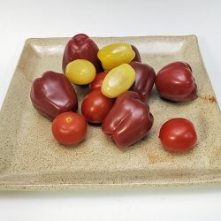 Eggshell dinner plate